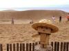 こちらが砂丘でございます